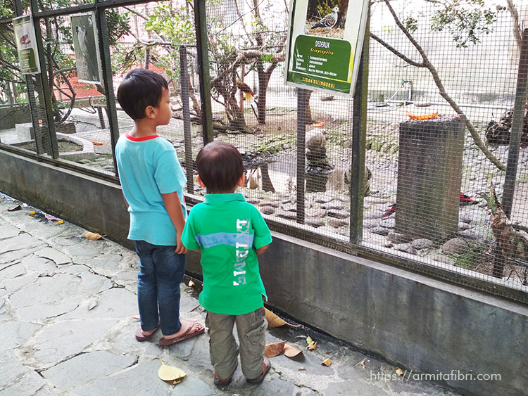Foto Kebun Binatang Garut