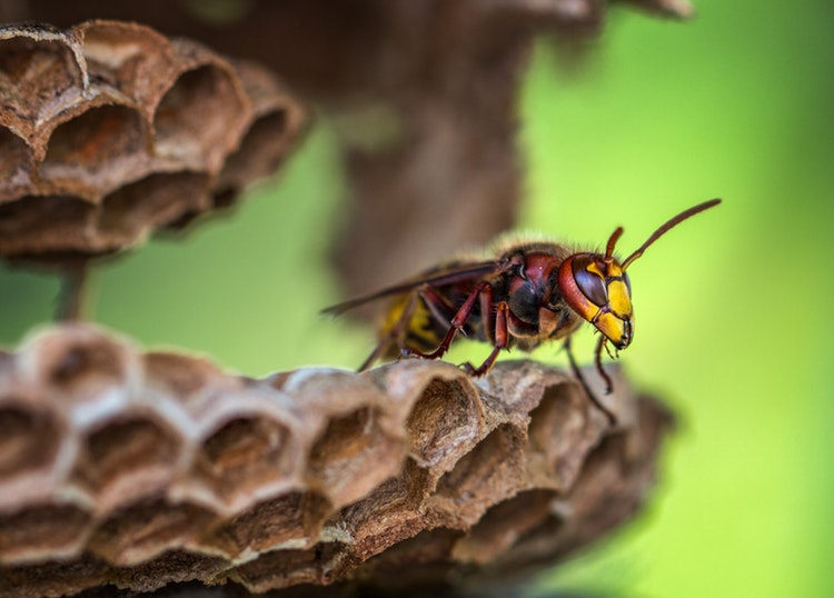 pengalaman disengat tawon